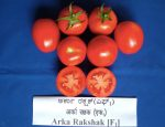 arka rakshak tomato cultivation